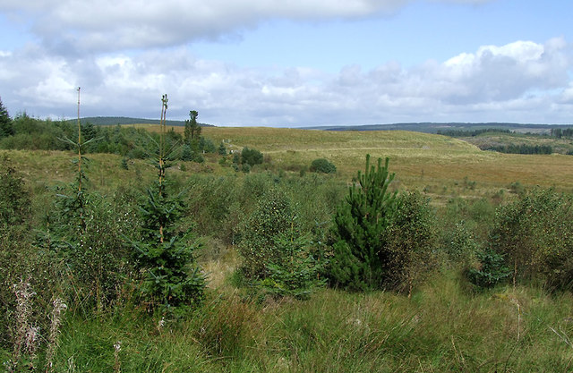 Moorland and forest south-east of Soar-y-Mynydd, Ceredigion