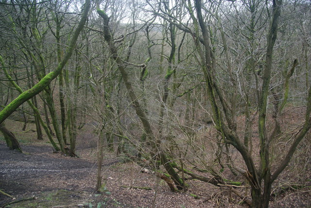 Woodland by the Irwell Sculpture Trail