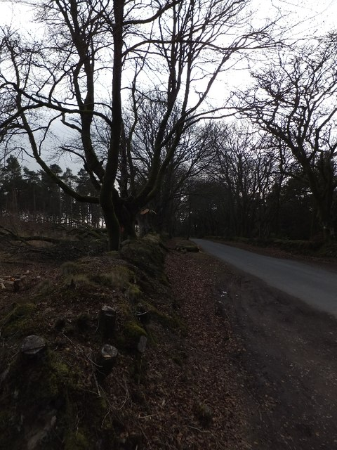 Road through Marsh Plantation