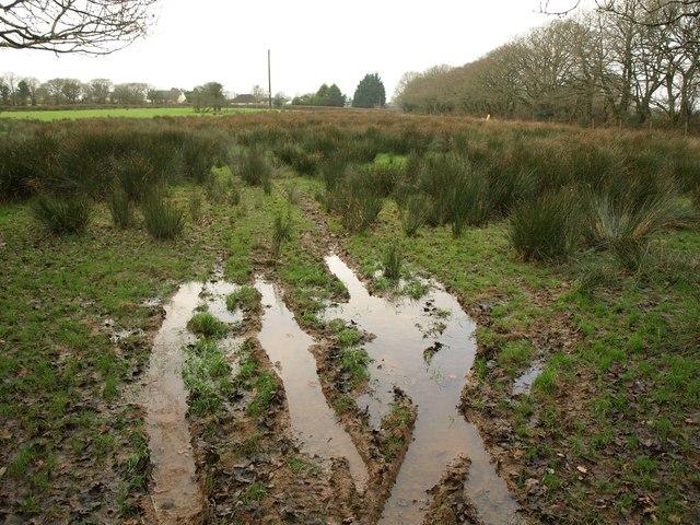Rushy meadow, Folly Gate