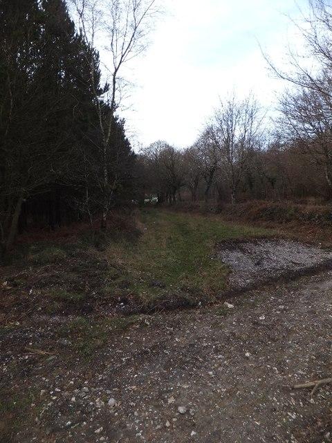 Cleared strip beside minor road near Kenton Hill