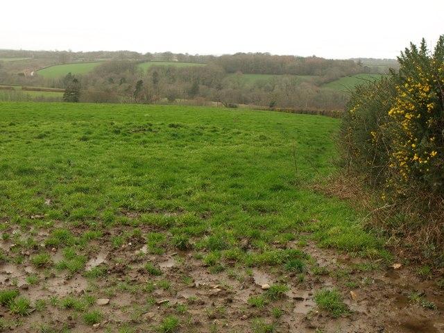 Field near Fairleigh Farm