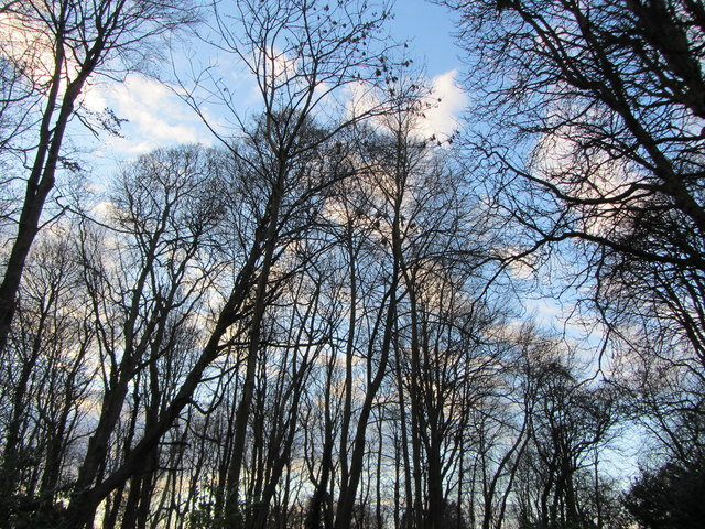 Tree branches silhouetted against sky, Landwade