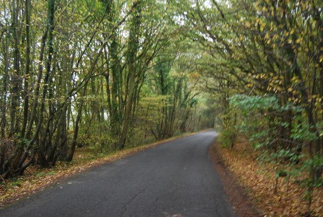 Hicks Forstal Wood