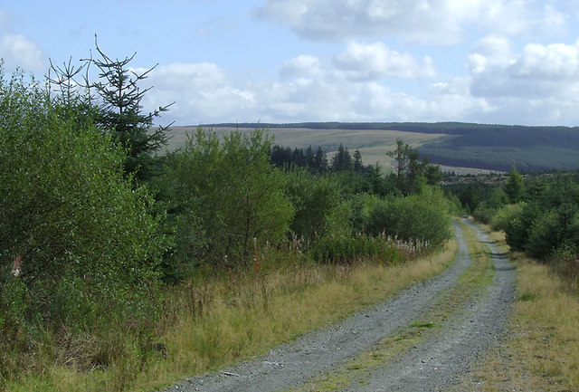 Forestry road south-east of Pen-y-Gurnos, Ceredigion
