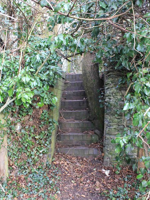 Tree and steps by old tramway embankment