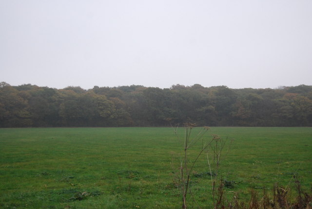 East Blean Wood