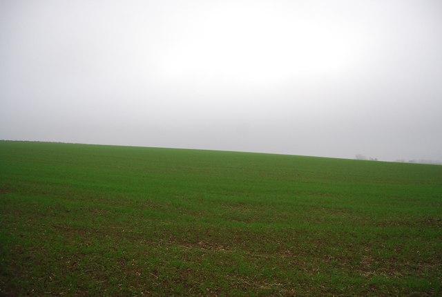 Farmland south of East Blean Wood