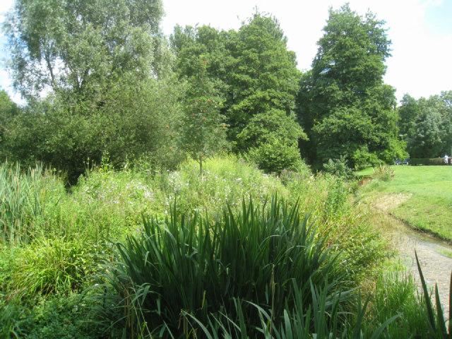 River Loddon - Eastrop Park