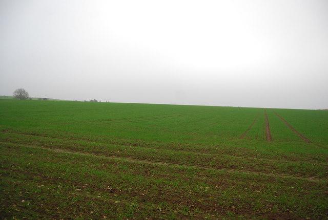 Farmland near Calfs Wood