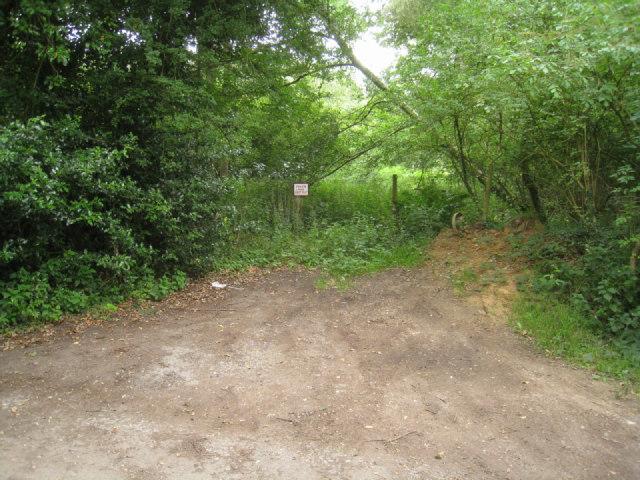 Corner of Black Wood