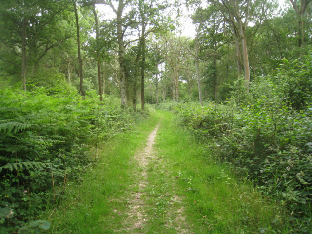Walking in Black Wood
