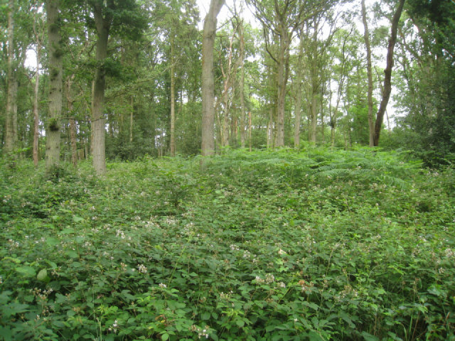 Thick undergrowth - Black Wood