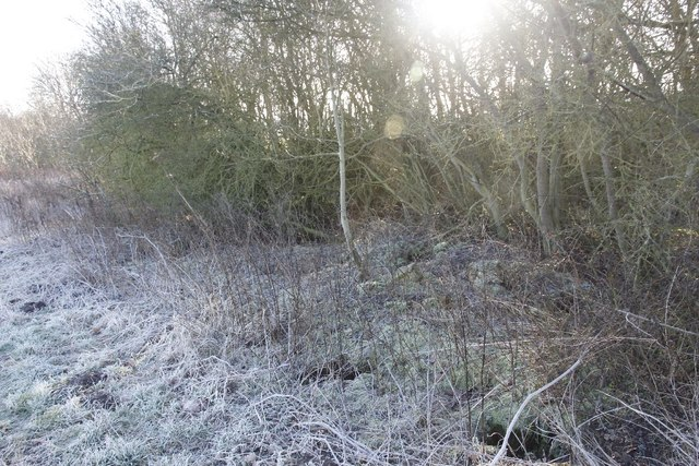 Rubble in the hedge