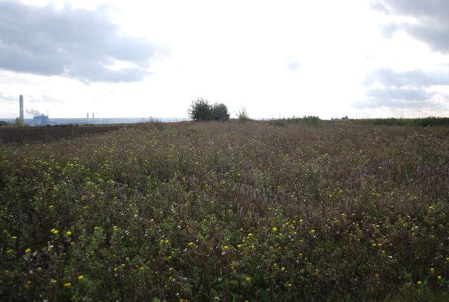 Overgrown  farmland, Malmaynes Farm