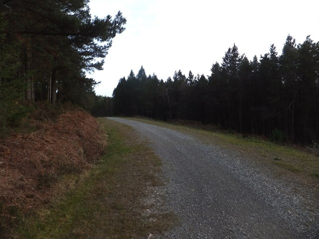 Forestry track on Haldon
