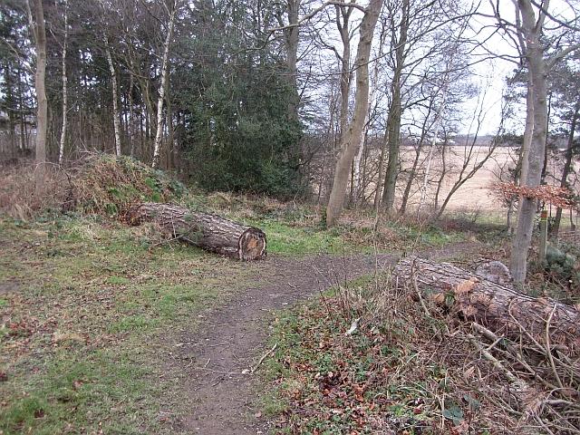 Fallen timber, Winton Estate
