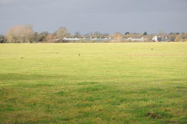 Farmland near Badgeworth