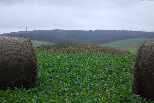 Tumulus in a turnip field