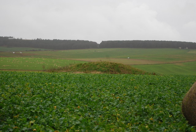 Tumulus and turnips