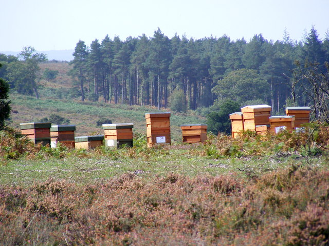 Beehives near Coopers Hill