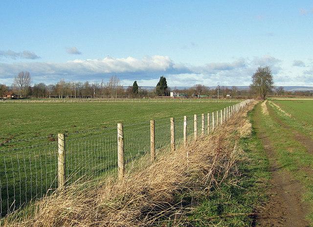 Grassy track off Green Dike Lane