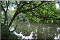 TQ7554 : River Medway by N Chadwick