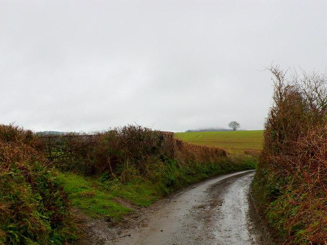 Ridgeback Lane