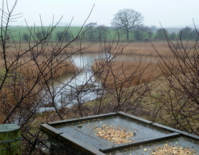 Bird table in the Carr Vale reserve