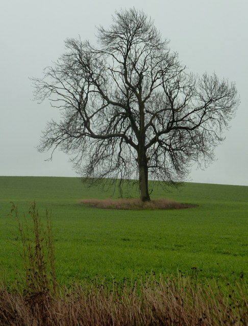 A tree in a large field