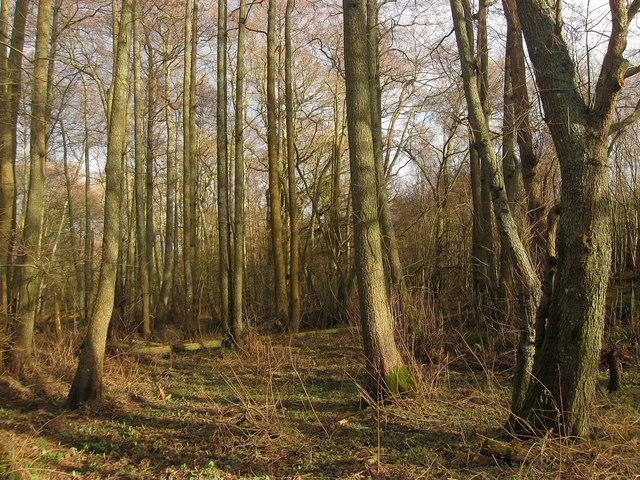 Bolt Wood