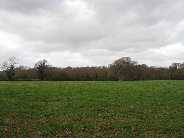 South Field/Wood Field