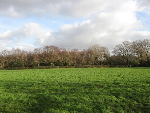 Middle Field