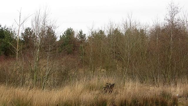 Woodland, Westfield