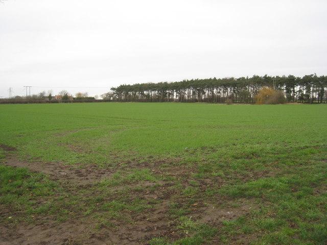 View towards Dunn's Plantation