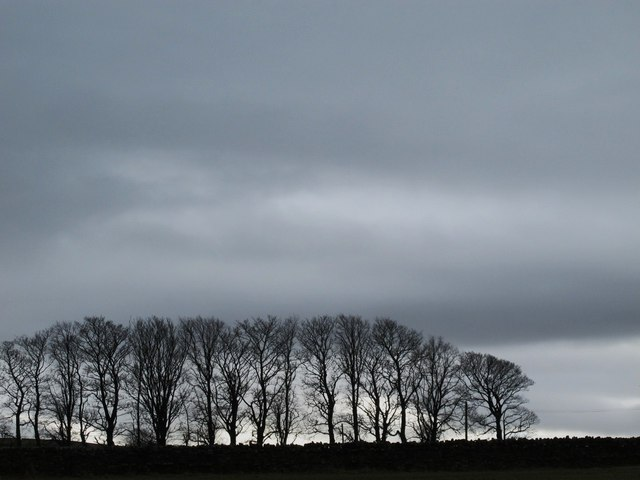Plantation above East Allendale