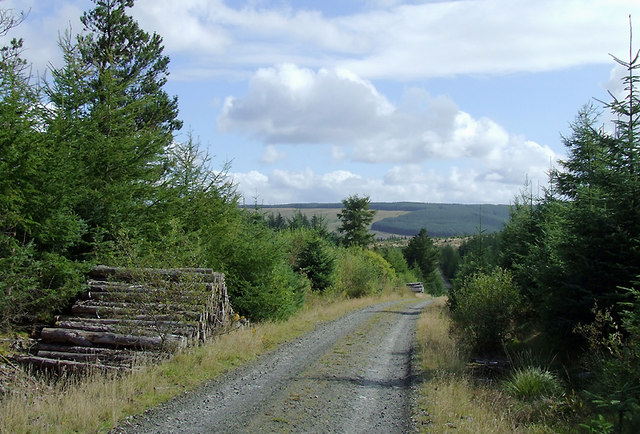 Forestry road in the Dalarwen Plantation near Pen y Gurnos, Ceredigion