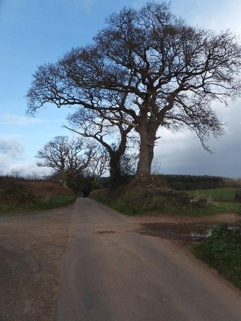 Winter trees near Brickhouse Wood
