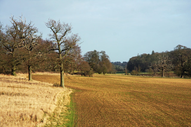 Dairy Wood and Ickworth Park