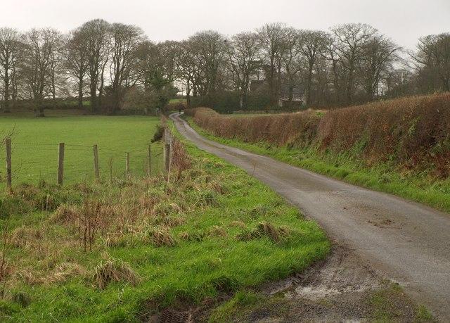 Lane to Bogtown