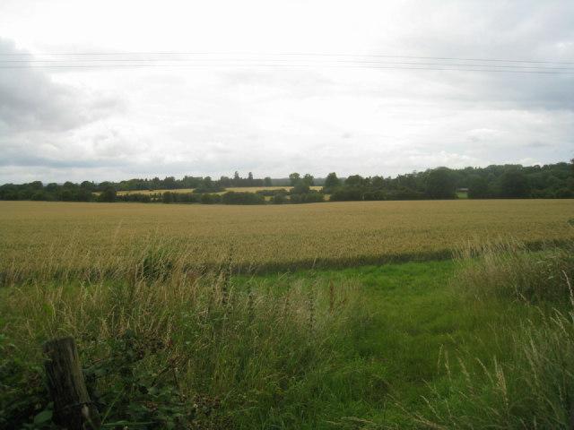 Summer crop by railway