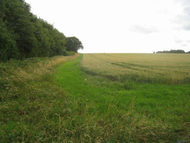 Farmland / Bull's Bushes Copse
