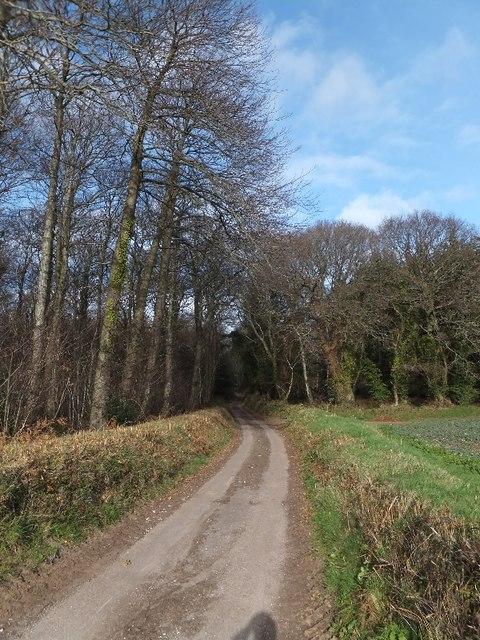 The woods of Kenton Common