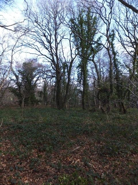 Wood Brake woodland