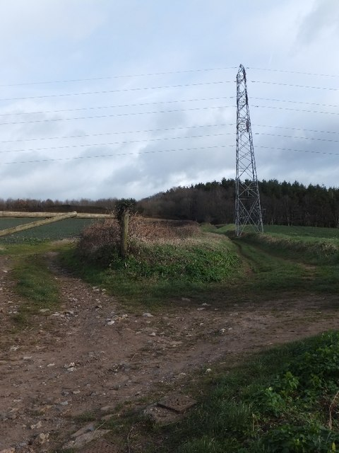 Track to Wood Brake woodland and pylon