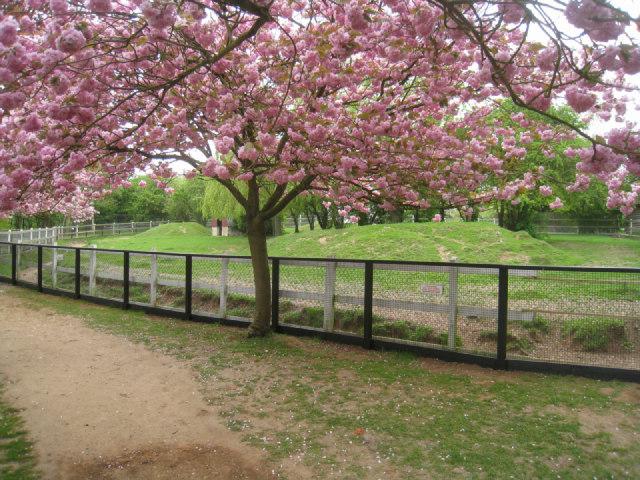 Blossom at Linton Zoo