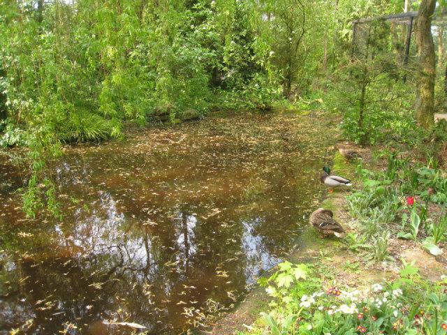 Duck pond - Linton Zoo