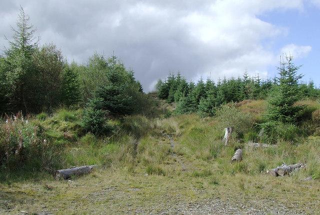 Track through the Dalarwen Plantation, Ceredigion