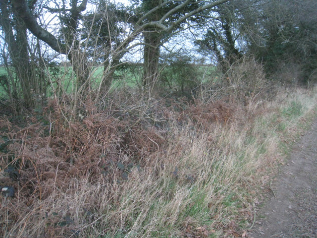 Dull winter field margin