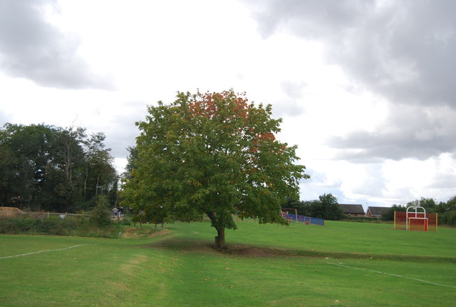 Tree, Claydon Recreation Ground